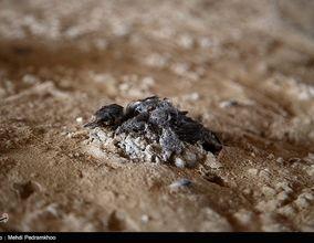 تصویر وحشتناک مرگ در تالاب شادگان