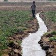 جیره بندی آب کشاورزی قطعی است