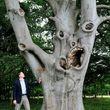 عجیبترین درختان جهان را ببینید +عکس