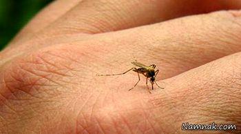با این اسانسها، پشهها را فراری دهید