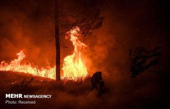 آتش سوزی 10 هکتار از اراضی ملی در فیروزکوه