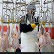 قیمت گوشت مرغ 15 هزار تومان شد