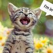 برنامهای جالب که با آن صدای گربه خود  را ترجمه میکنید!