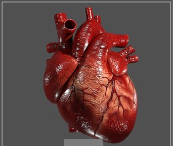 ویتامین مفید برای قلب را بشناسید