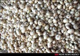 کاهش ۲۱ درصدی قیمت پیاز و رشد ۳۷ درصدی برنج ایرانی در سال گذشته