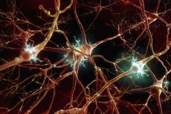ویروس کرونا  کل سیستم عصبی را تهدید می کند