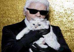 گربه طراح مشهور