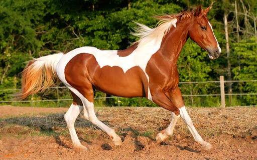 درمان کرونا با خون اسب