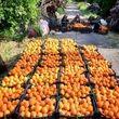 ویتامین C و ۱۲ غذای قویتر از پرتقال