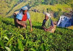 ضربه چای هندی از تحریم ایران