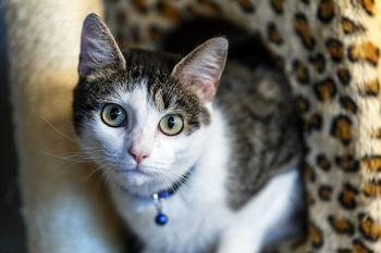 چرا گربه ها از خیار می ترسند + ویدیو